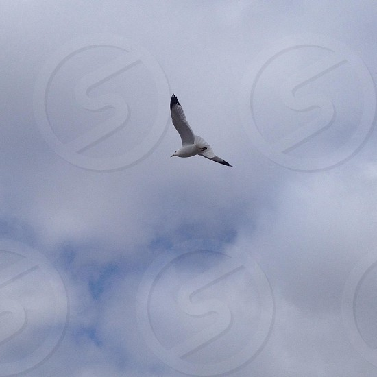 seagull flying under cloudy sky during day photo