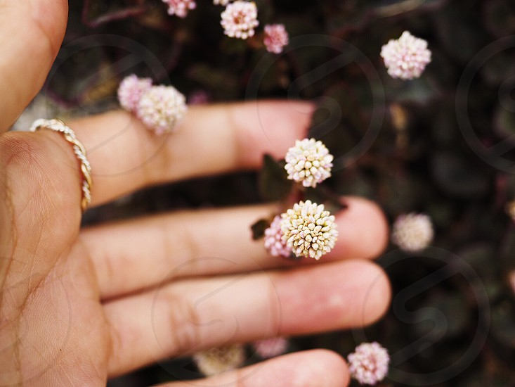 small flowers between persons fingers photo