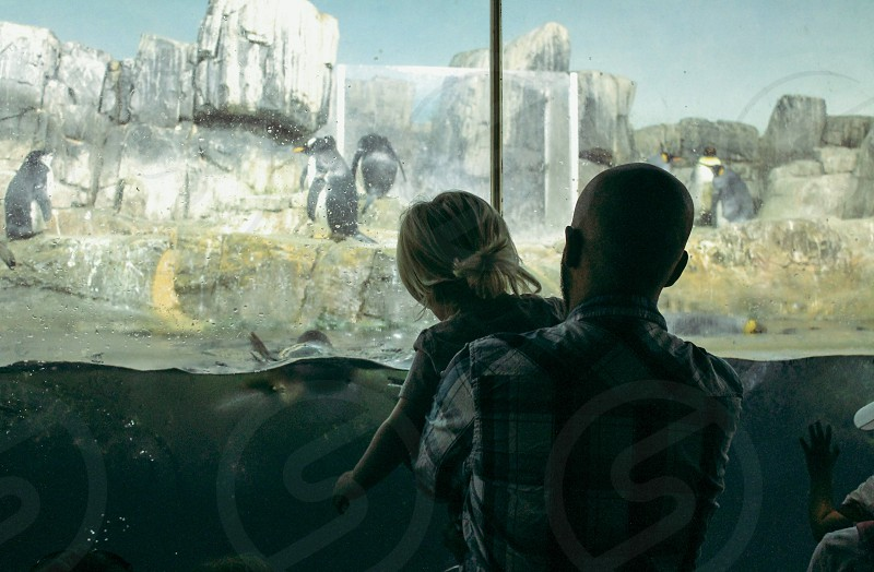 man carrying child in front of glass tank with swimming penguins photo