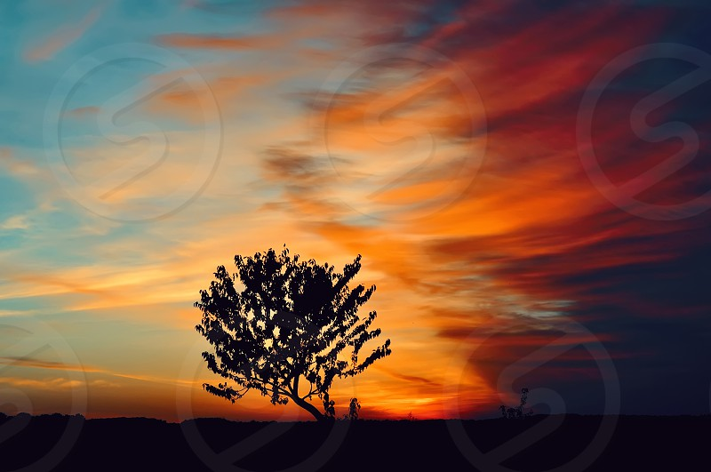 tree on a background of saturated sky at sunrise photo