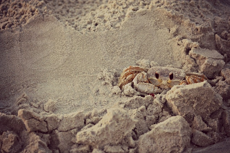 """Warmth"" A crab slowly wakes in the early morning and peeks out from its sandy bed. photo"
