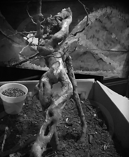 i collect beautiful roots and turn them into art. Not yet finished. #root #nature #art #hobby #bnw #blackandwhite #noir #darkart #pittsburgh photo