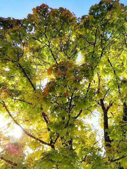 A beautiful sunny autumn day photo