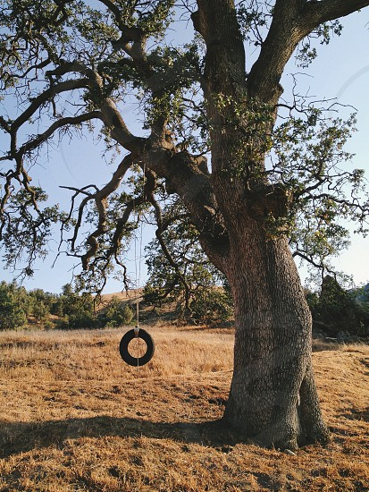brown tree with black swing tire photo
