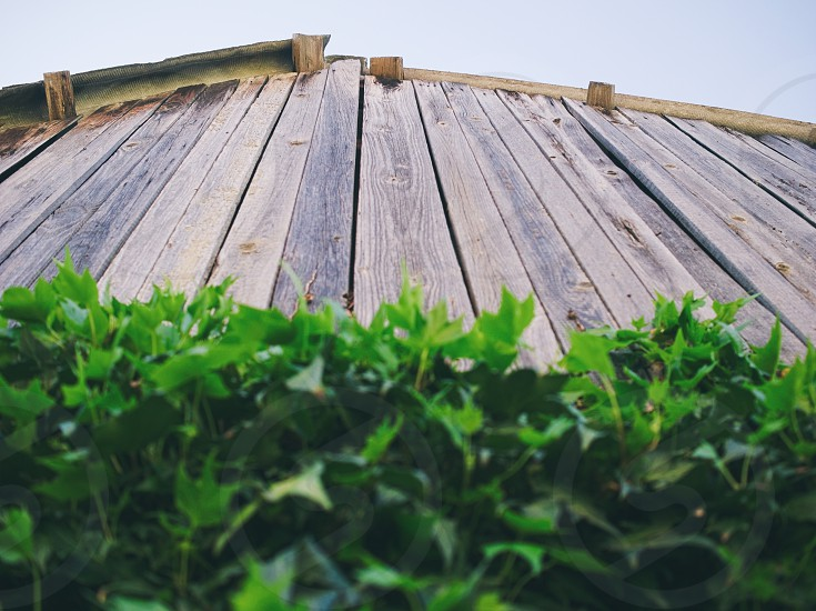 Wooden Shack Roof with Green Leaves and Blue Sky Closeup photo