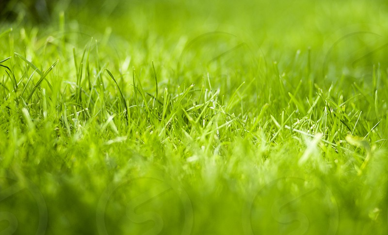 Macro grass ❤️ photo
