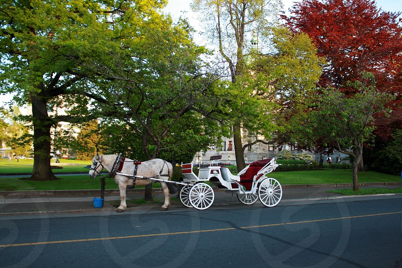 white and red carriage photo