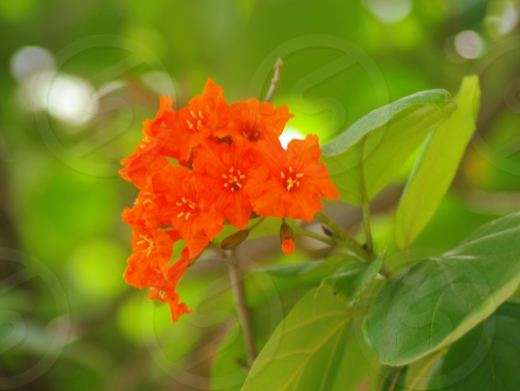 Tropical flowers photo