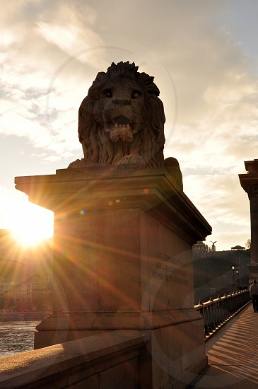 brown lion statue photo