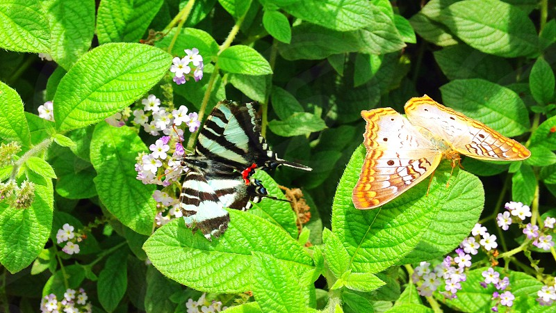 Two Butterflies with Green photo