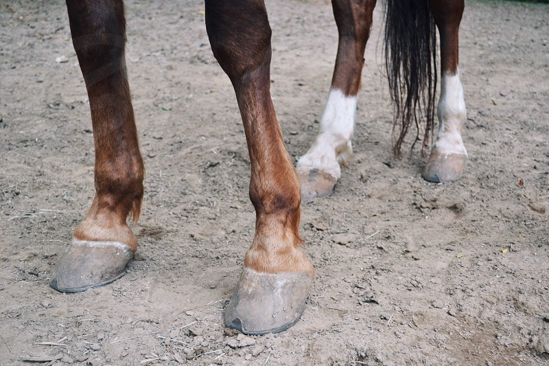 brown and white horse legs photo
