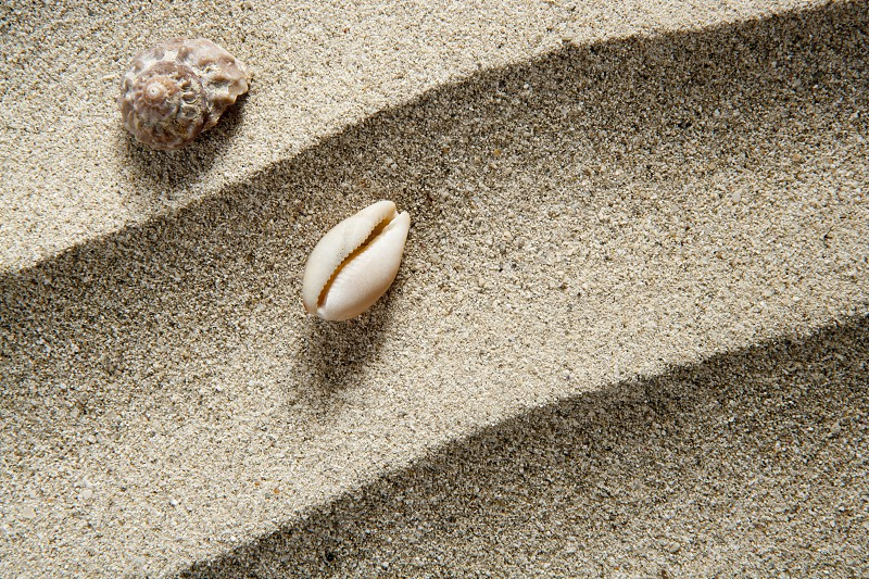 closeup macro of shell and sea snail over beach sandwith  wavy texture such a summer vacation background photo