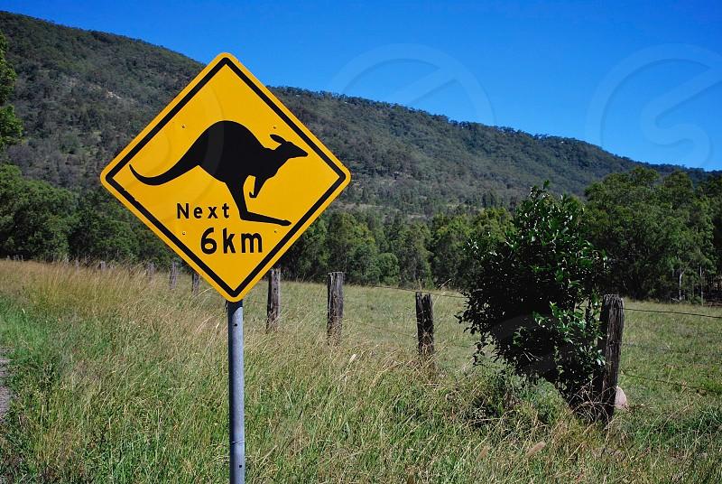 Roo Crossing in Australia photo