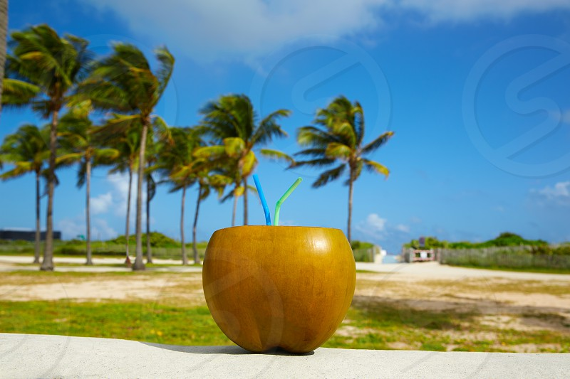 Miami South Beach coconut drink with 2 straws in Florida photo