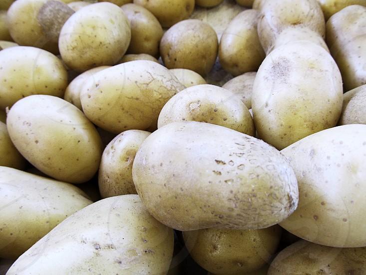 New gold potatoes at farmers market photo