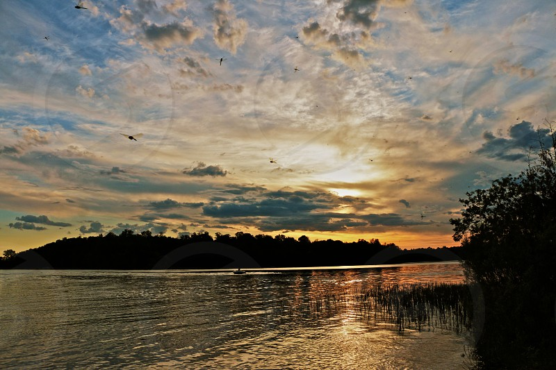 dragonflies at sunset over water photo
