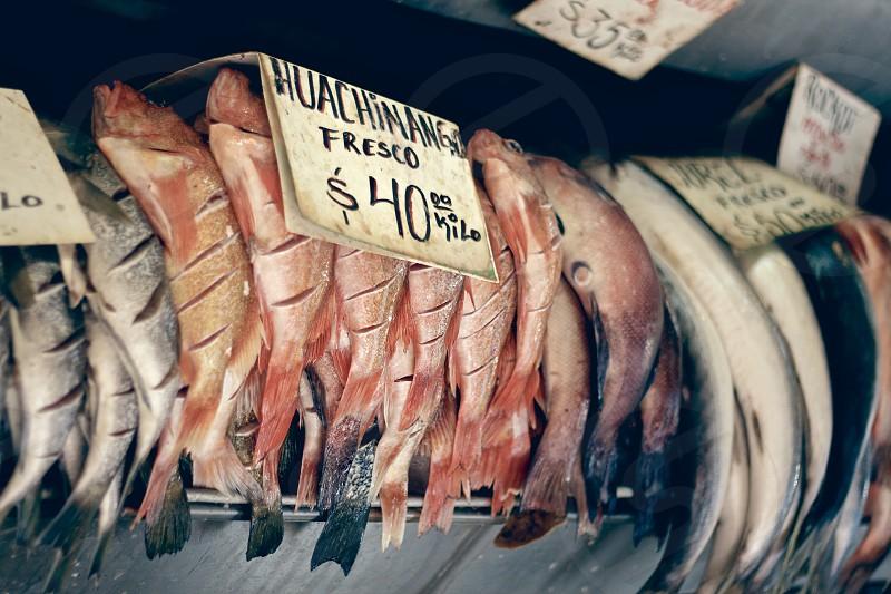 Baja California Ensenada México fish market streets photo