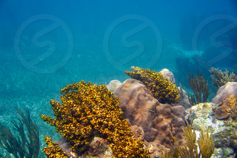Mesoamerican barrier Great Mayan Reef in Riviera Maya of Caribbean Mexico photo