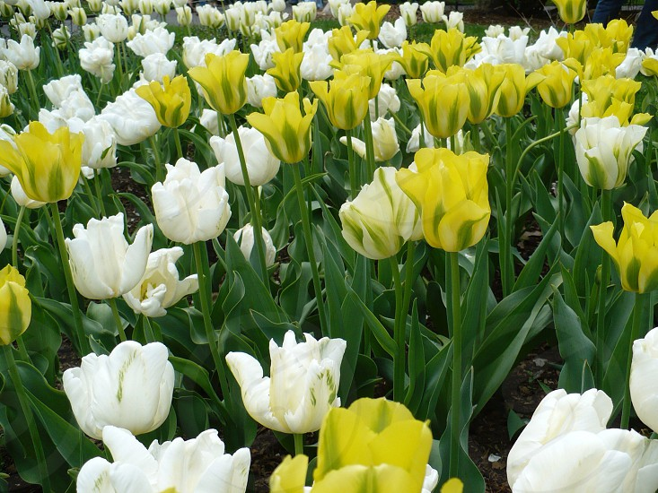 white and yellow flowers photo