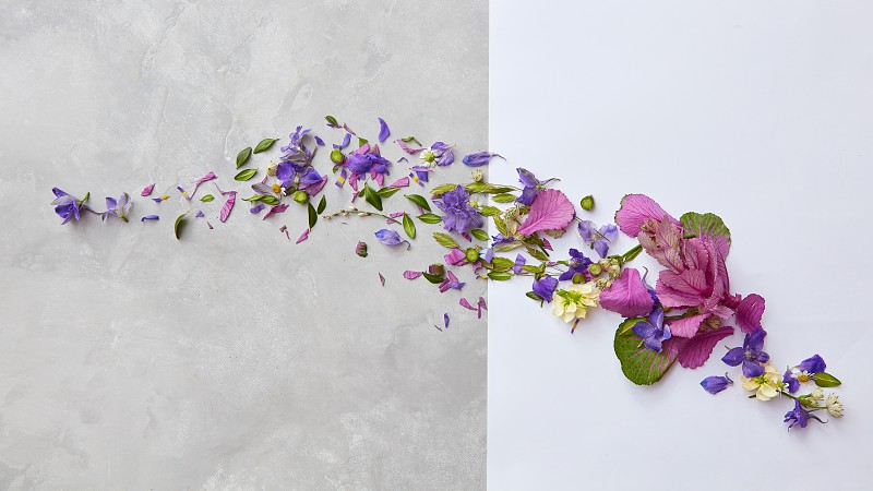 frame from flowers and leaves on a concrete background with space for text flat lay photo