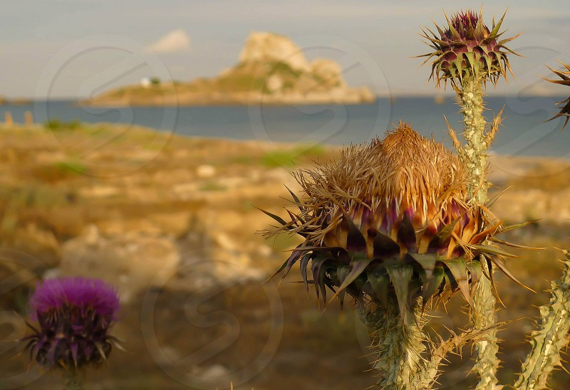 I dream of Greece photo