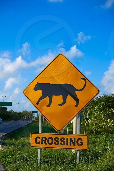 Road sign panther Jaguar crossing in Riviera Maya at Mayan Mexico photo