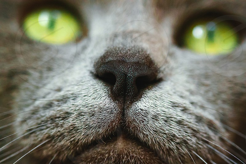 Cats face photo
