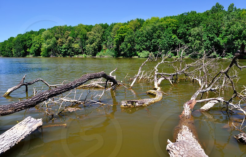 branches of trees in water photo