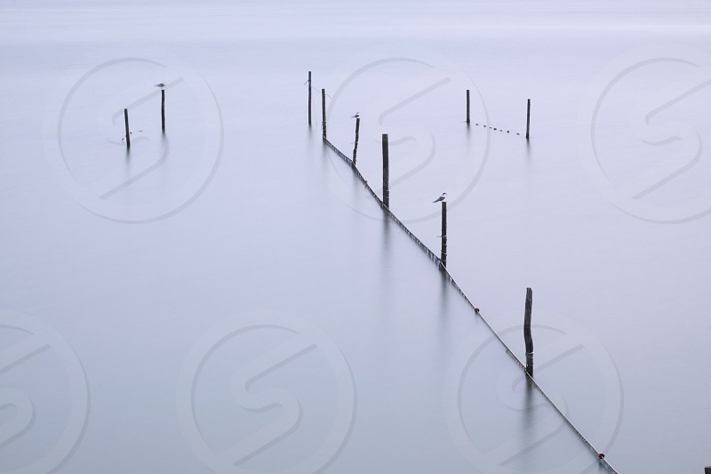 photography of post on body of water at daytime photo