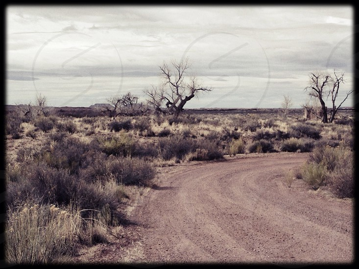 Painted Desert AZ photo