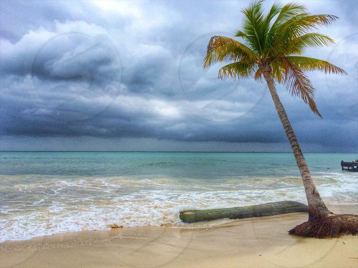 green coconut palm tree on seashore photo