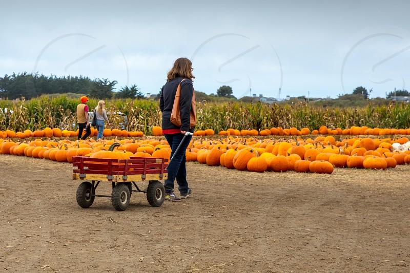 in the pumpkin patch photo