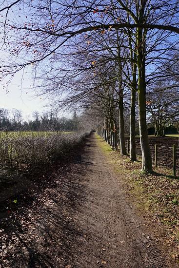 Tree Lined Path Cambridgeshire                                photo