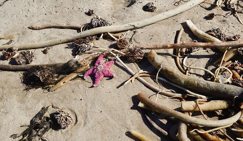 pop of color starfish on the beach starfish beach starfish in the sand photo