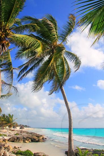 Caribbean tropical beach in Tulum Mexico at Mayan Riviera photo