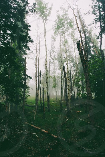 Wander in the woods photo