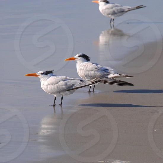 white birds on beach photo