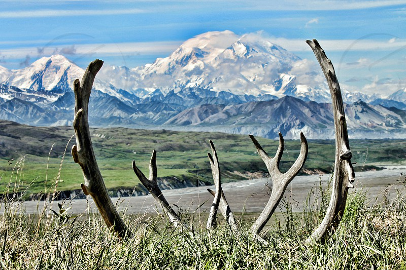 Mount McKinley range of mountains see through caribou antlers in Denali Park Alaska. photo