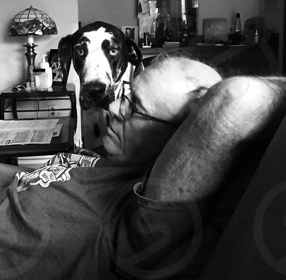 Love;companion;friend;devotion;pets;animals;master photo