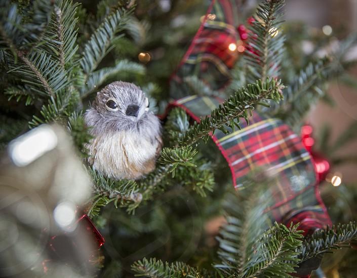 Plaid Christmas photo