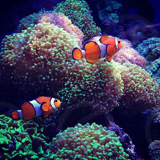 London aquarium  photo
