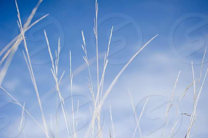 close up photography of white grass plant under white clouds and blue sky during daytime photo