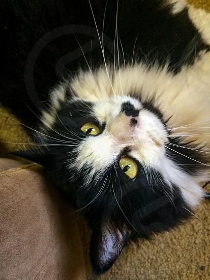 Kittyblackwhite photo