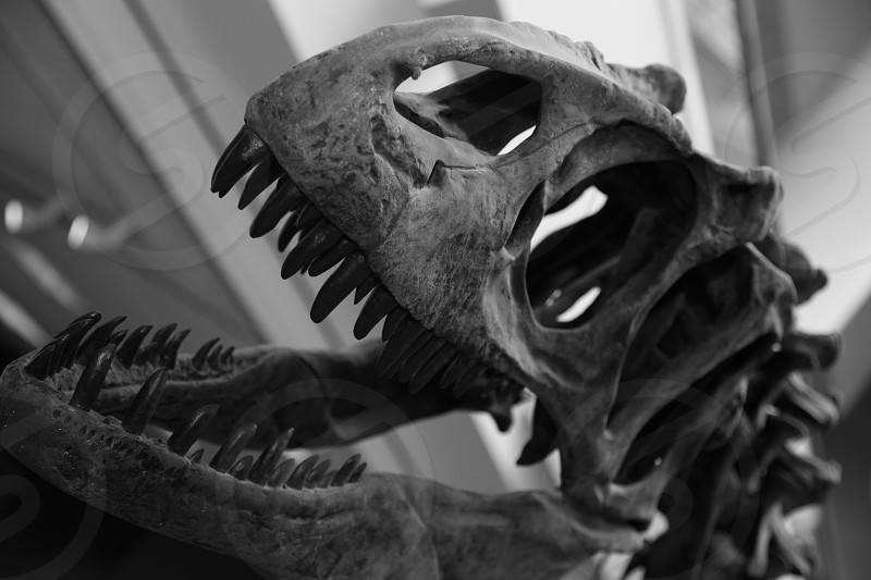 grayscale photography of animal skull photo