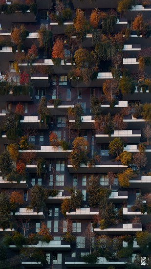 Bosco Verticale Vertical Wood Milan Italy photo