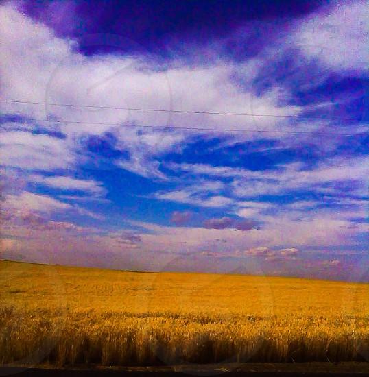 Wheat fields near coulee city Washington photo