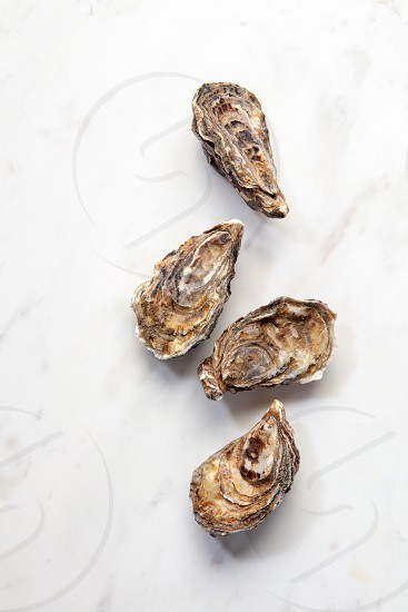 Fresh raw natural oysters on a marble background with place for text. Flat lay. Healthy seafood. photo