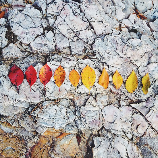 3red and 7yellow leaves on top of white stone photo