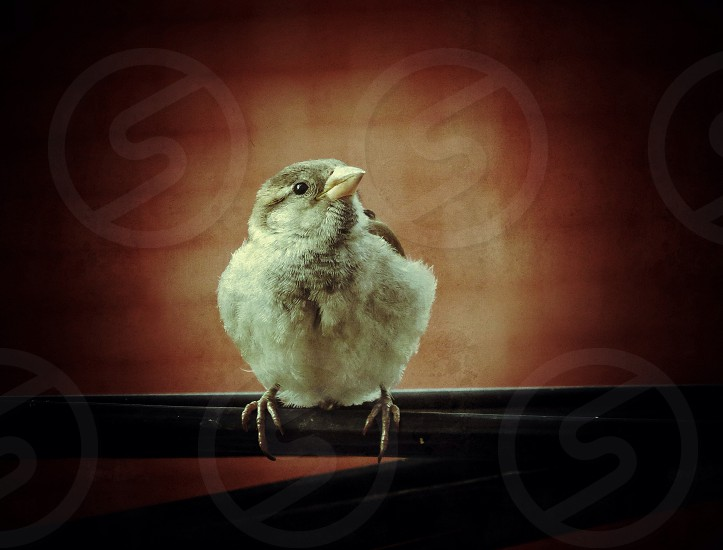 white and brown chick photograph photo