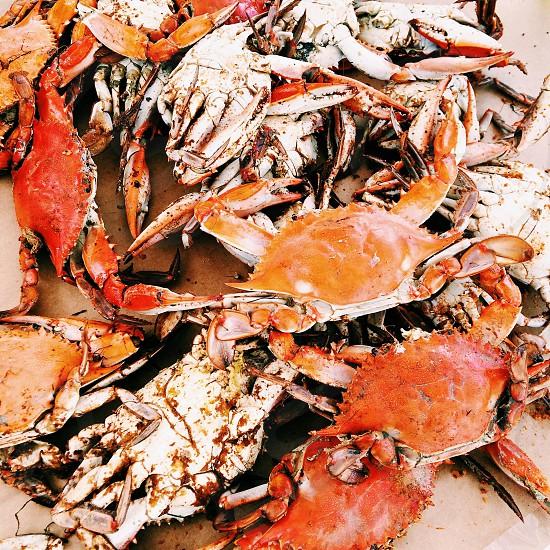 Maryland Crabs photo